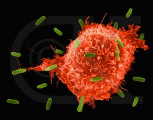 The immune systems macrophage strutting its stuff on e-coli - resisting infection